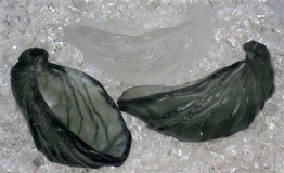Megan Bottari, Oyster shells, lost wax cast crystal