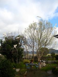 Brekkie time for the birdies