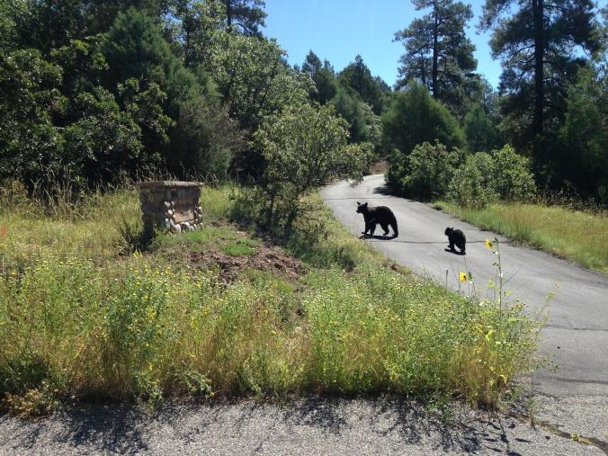 Bears at Phil's